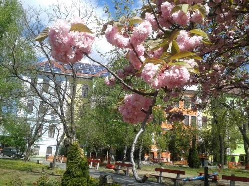 HPK virágok az udavaron11