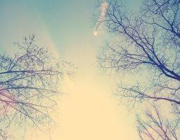 A fák felett az ég - kiállított kép