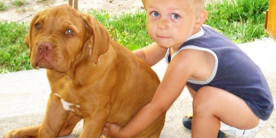 kutyaharapásos sérülésekről