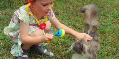 Állat-asszisztált terápia