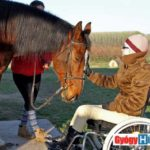 AAT - Állat asszisztált terápia