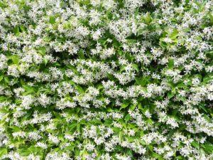 jázmin-garden-1029249_640