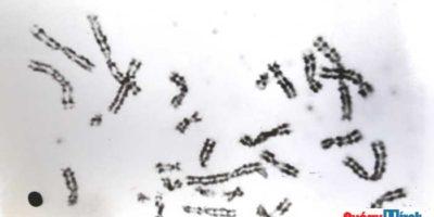 génterápia veszélyei