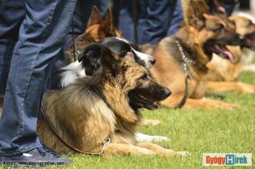 Állat asszisztált terápia