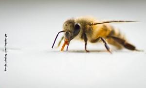 méhcsípés