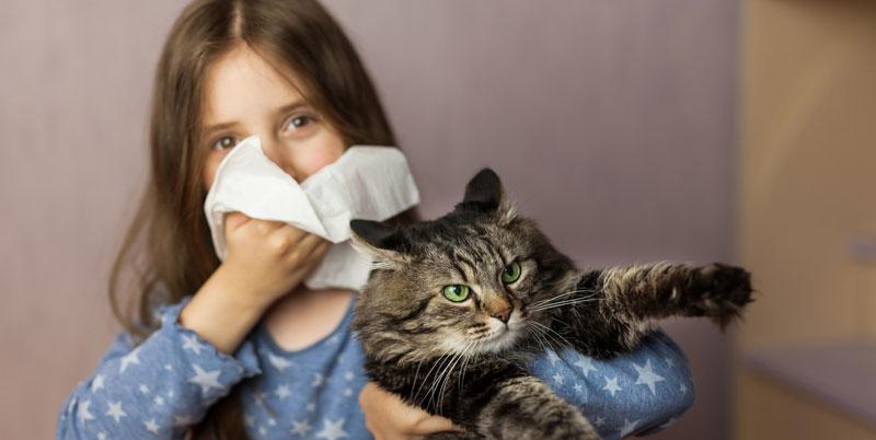 egy kép, amelyen macskaallergia miatt trüsszent egy kislány