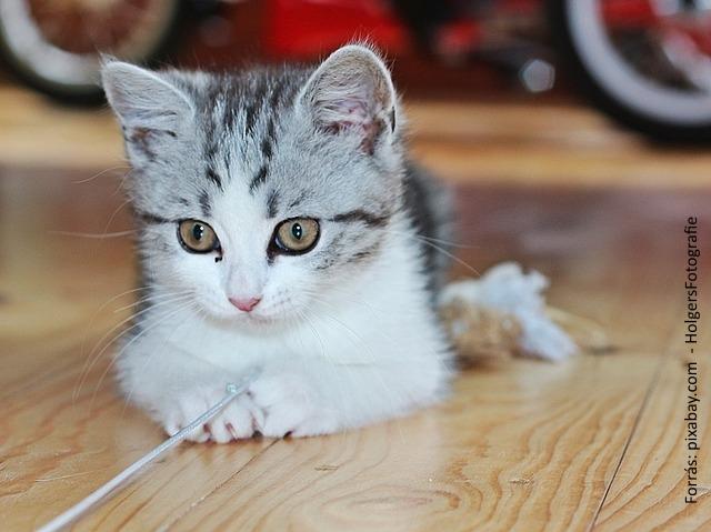 Allergiamentes macska