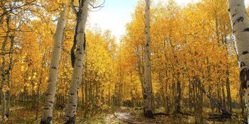 október-forest-828783_640
