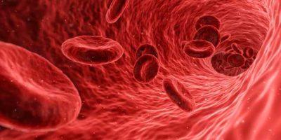 védekező sejtek
